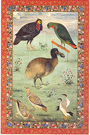The Dodo, Ustad Mansur, Agra, 1610